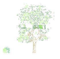 Dwg Cad Objekte: Baum und Strauch