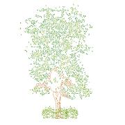 Dwg Cad Objekte: Baum Ansicht