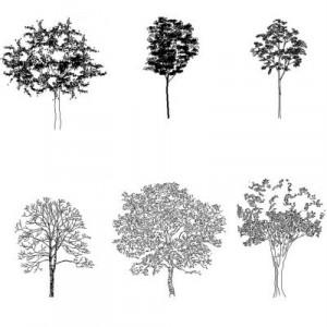 Dwg Cad Objekte: Baume Ansicht