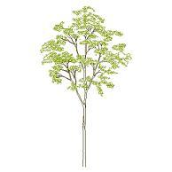 Dwg Cad Objekte: Baum Ansicht (10)
