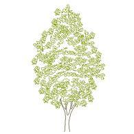 Dwg Cad Objekte: Baum Ansicht (12)