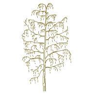 Dwg Cad Objekte: Baum Ansicht (14)