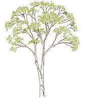 Dwg Cad Objekte: Baum Ansicht (2)