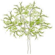 Dwg Cad Objekte: Baum Ansicht (4)