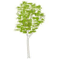Dwg Cad Objekte: Baum Ansicht (5)