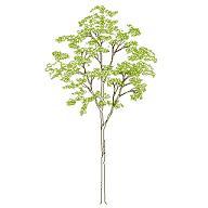 Dwg Cad Objekte: Baum Ansicht (6)