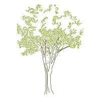 Dwg Cad Objekte: Baum Ansicht (7)