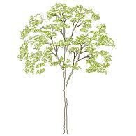 Dwg Cad Objekte: Baum Ansicht (9)